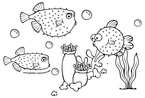 gambar mewarnai ikan buntal