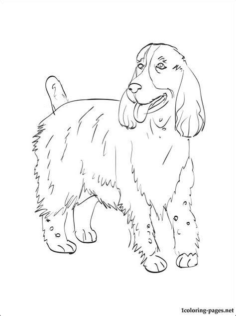 english springer spaniel coloring page coloring pages