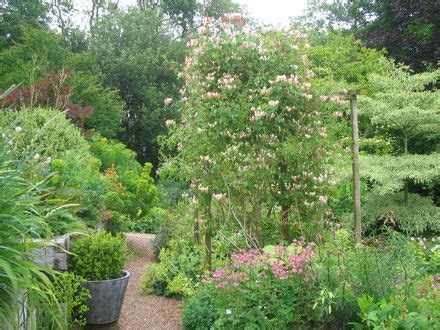 66 Best Images About Carol Kleins Cottage Garden On