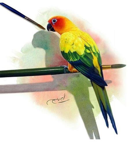 sun conure art   conure pet birds birds