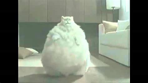 fette katze beim abnehmen lf youtube