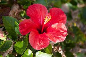 Blumen Im Sommer : blumen archives robin zimmermann ~ Whattoseeinmadrid.com Haus und Dekorationen