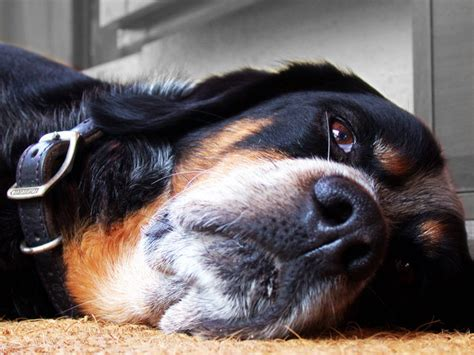 seizures in dogs seizures in dogs and what to do if your dog experiences one