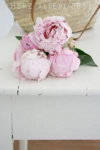 Langage Des Fleurs Pivoine : light pink peonies pivoines pivoine fleurs et fleur jardin ~ Melissatoandfro.com Idées de Décoration