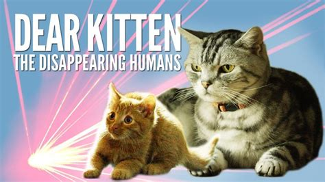 1000+ Ideas About Kitten Videos On Pinterest