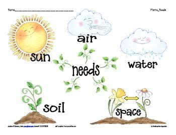 growing things ks1 的图片搜索结果 plants kindergarten science activities cycles plant lessons