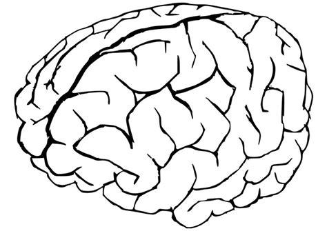 Hersenen Kleurplaat by Kleurplaat Hersenen Afb 22945