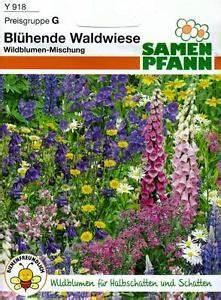 Blumen Für Schatten : bl hende waldwiese wildblumen f r halbschatten und ~ Lizthompson.info Haus und Dekorationen