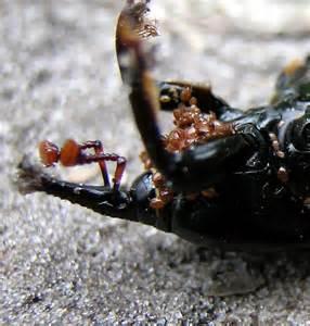 How to Kill Bird Mites On Humans