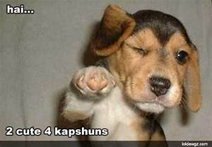 Funny Picture Clip: Funny dogs with captions - Funny Dogs ...