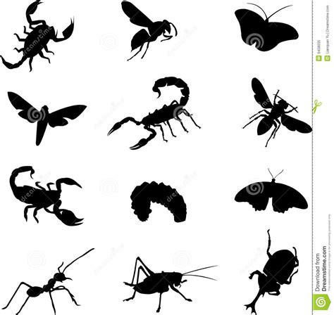 Various types of insects stock vector Illustration of