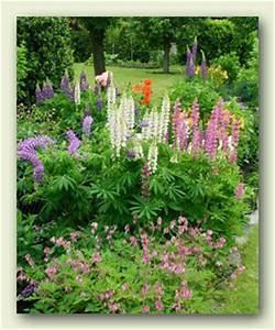 Pflanzen Sonniger Standort : gartenblumen stauden farne gr ser garten ~ Lizthompson.info Haus und Dekorationen