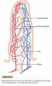 Gastrointestinal Blood Flow