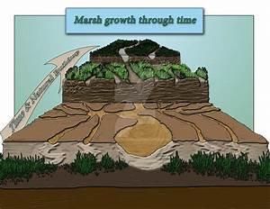 Salt Marsh Formation By Josephagarcia On Deviantart