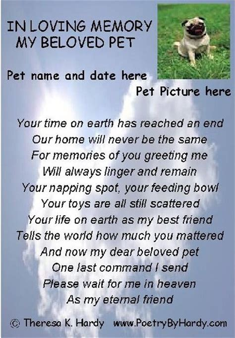 in memory of pets quotes