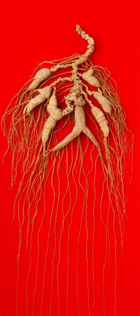 korean ginsengwild root highest quality