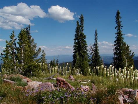 6 Breathtakingly Beautiful Montana National Parks and ...