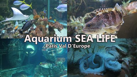 aquarium sea val d europe visite
