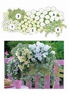 Winterpflanzen Für Balkonkästen : pflanzen set f r 60 cm balkonk sten fr hling balkonk sten pinterest balkonk sten 60er und ~ Indierocktalk.com Haus und Dekorationen