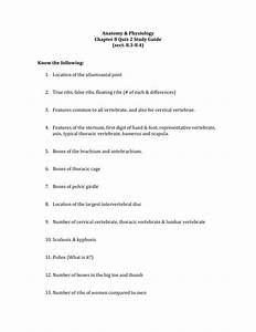Anatomy  U0026 Physiology Chapter 8 Quiz 2 Study Guide  Sect  8 3
