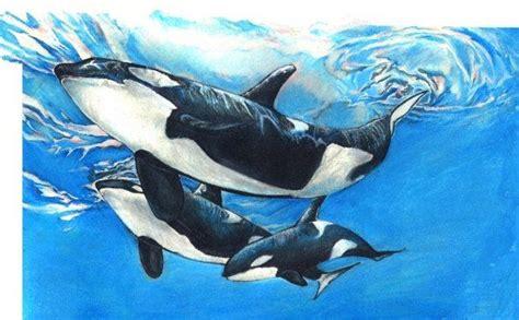 killer whale orca colored pencil  art work pinterest