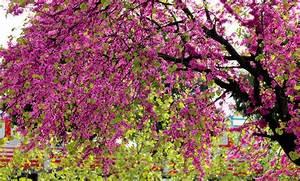 Arbre Ombre Croissance Rapide : quel arbre croissance rapide pour faire de l 39 ombre ~ Premium-room.com Idées de Décoration
