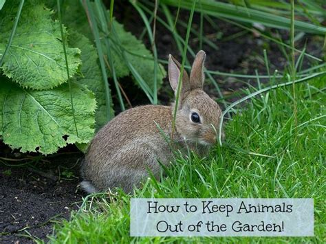 Keep Animals Out Of Garden by How To Keep Animals Out Of The Garden Gardens The O