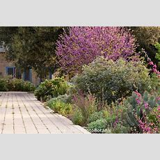 Permeable Driveway Beside Mixed Border Of Trees Shrubs And