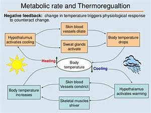 Lec 09 Thermoregulation