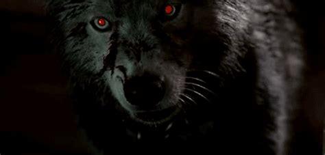 Фото Черный волк, с красными глазами, рычит на черном фоне