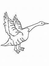 Goose Coloring Flying Netart Snow Drawings Designlooter sketch template