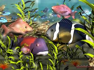 Beautiful Fishes Wallpaper Pictures | Sea Water Animals ...