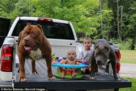 anak anjing pitbull  diklaim bernilai rp miliar