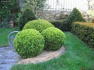 Boule De Buis : buis boule jardin de week end les galeries photo de ~ Melissatoandfro.com Idées de Décoration