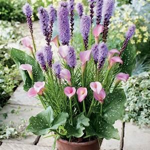 Bulbes D été : bulbes d 39 t comment les planter facilement i d tente jardin ~ Melissatoandfro.com Idées de Décoration