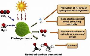 Overall Schematic Of Photosynthesis Energy Conversion  The
