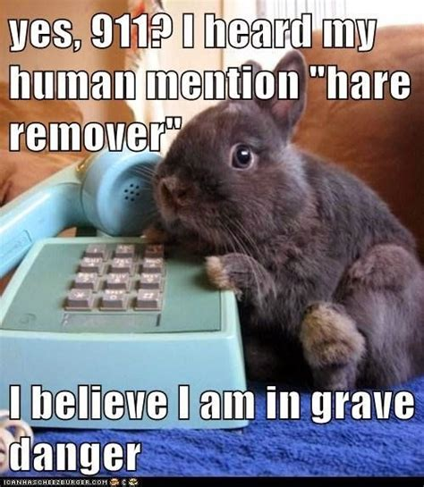 Funny Easter Bunny Memes - chocolate bunny rabbit meme google search lmao inspirations and the like pinterest