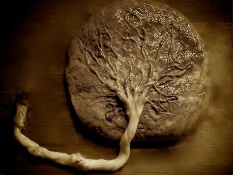 Placenta Encapsulation Mother Naturale
