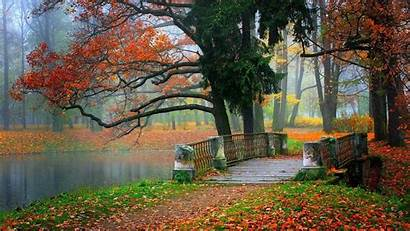 Beauty Natural Nature Forest Tree Wallpapers Tag