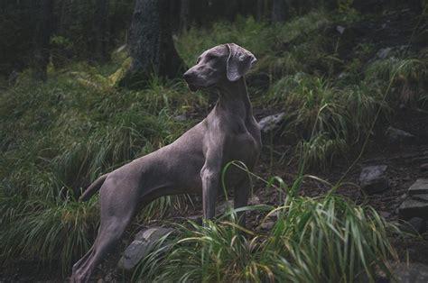 9 labākie suņu rotaļlietu grozi jūsu uzglabāšanas vajadzībām 2021 [Reviews] - Vekyto