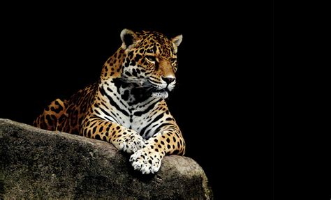 zoos zoo america houston else vacation offer discover guide