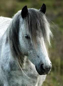 majors notes blog archive horse   home