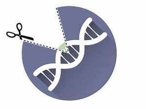 Crispr Transfection  Efficient Genome Editing