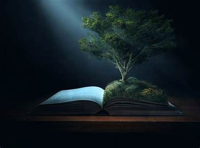 Bible Tree Christian Knowledge Wallpapers Growing 4k
