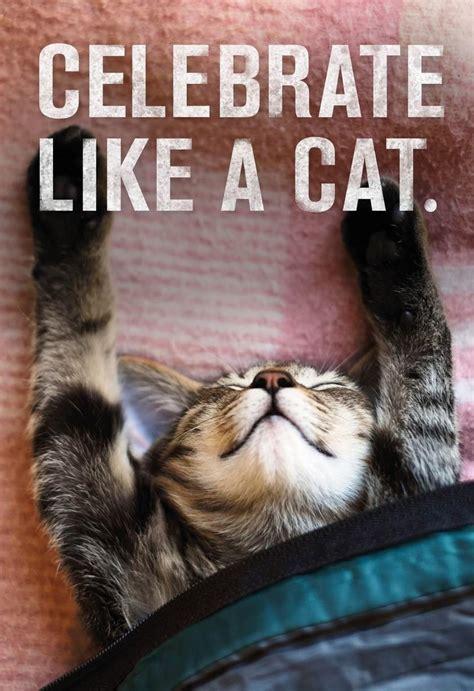 celebrate   cat birthday card greeting cards hallmark