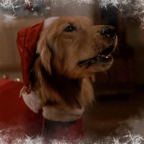 barking merry christmas gif  lifetime find share