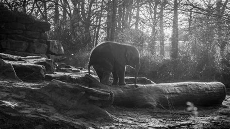 wallpaper elephant forest sunlight animals