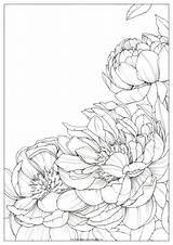 Coloring Drawing Polina Bright Peonies Flowers Acquerello Watercolor Pencil Peony Dipingere Disegni Sketches Printable Polinabright Drawings Poli Draw Floral Oeffnen sketch template