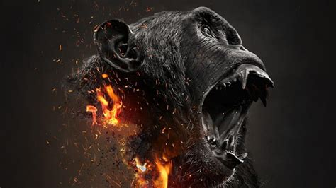 gorilla hd wallpaper wallpaper studio  tens