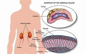 What Is Adrenalectomy